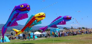 berkeley-kite-festival-berkeley-ca